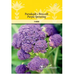 PARSAKAALI 'Purple Sprouting'