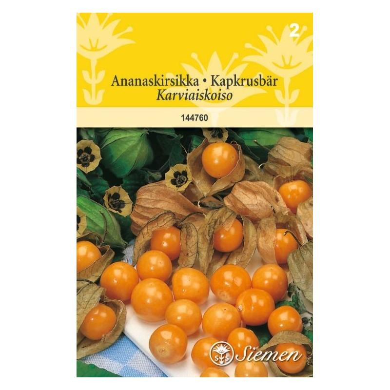 ANANASKIRSIKKA (Physalis peruviana)