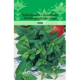 KÄHÄRÄMINTTU (Mentha spicata)