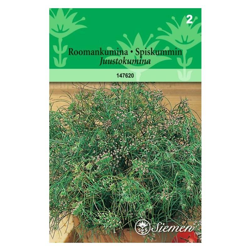 ROOMANKUMINA (Cuminum cyminum)