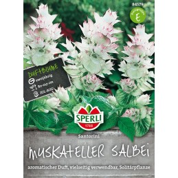MYSKISALVIA (Salvia sclarea)