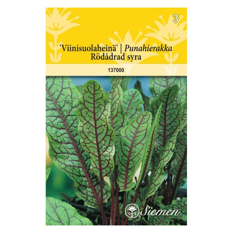 VIINISUOLAHEINÄ (Rumex sanguineus)