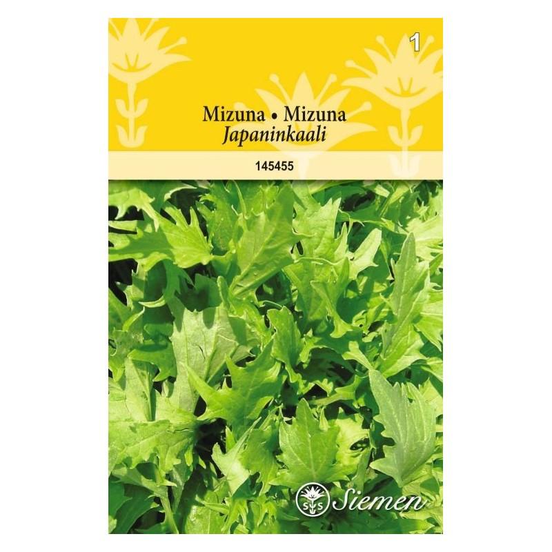 MIZUNA (Brassica rapa)