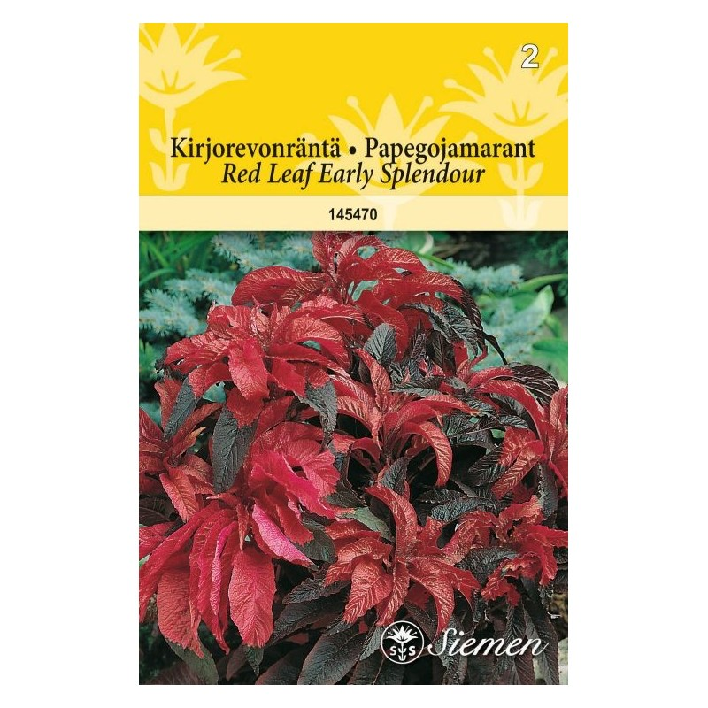 KIRJOREVONHÄNTÄ 'Red Leaf Early Splendour'