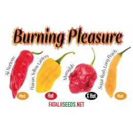 CHILILAJITELMA 'Burning Pleasure' 4 lajiketta