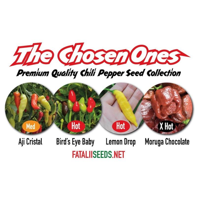 CHILILAJITELMA 'The Chosen Ones' 4x