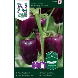 PAPRIKA 'Snacking Purple'