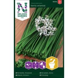 KIINANSIPULI 'Garlic Oriental'