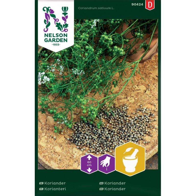 KORIANTERI (Coriandrum sativum)