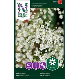 MORSIUSHARSO 'Snowflake'