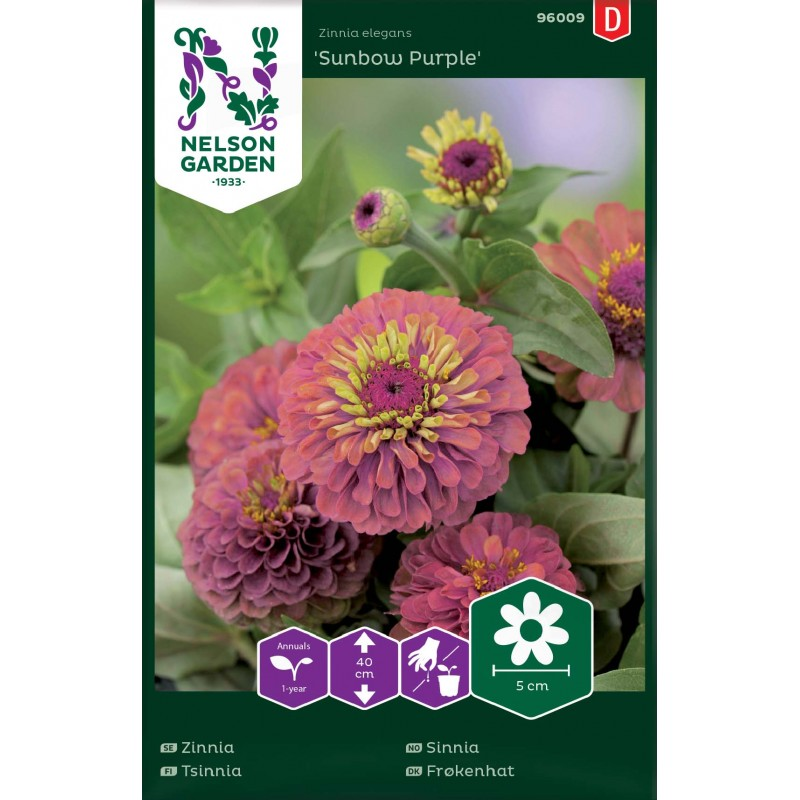 ISOTSINNIA 'Sunbow Purple'