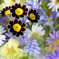 Kukat ja koristekasvit | Siemenkauppa.com