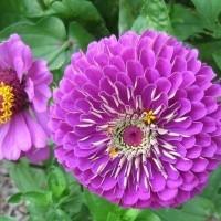 Kukkien siemenet | Siemenkauppa.com